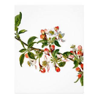 Apple Flowers Letterhead