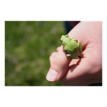 Apple Green Tree Frog Posters