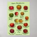 Apple Identification print