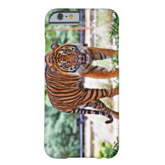 Apple iPhone 6 case of Sumatran tiger photo