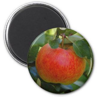 Apple James se aflige el imán