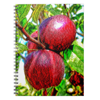 Apple Of My Eye Color Drawing Notebook