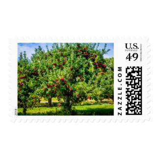 Apple Orchard Country Photography Postage Stamp