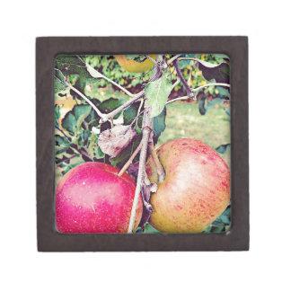 Apple Orchard Gift Box