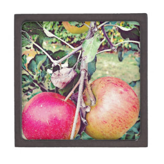 Apple Orchard Jewelry Box