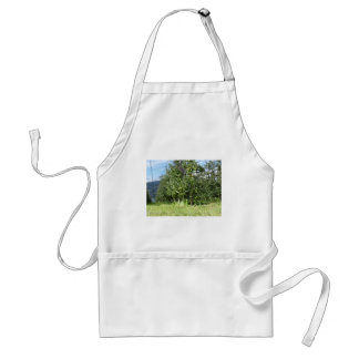 Apple orchard with protection nets adult apron