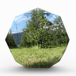 Apple orchard with protection nets award