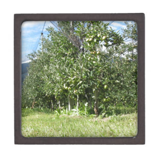 Apple orchard with protection nets gift box