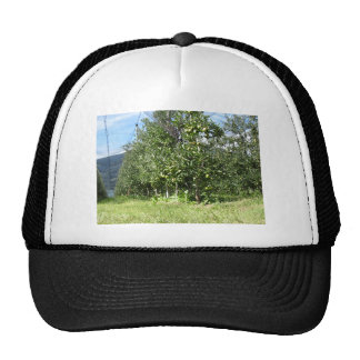 Apple orchard with protection nets mesh hat