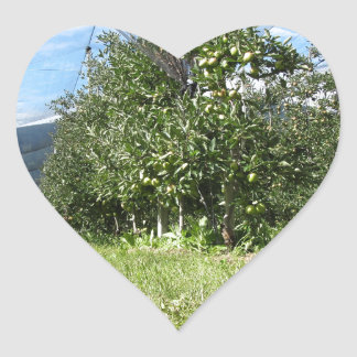 Apple orchard with protection nets heart sticker