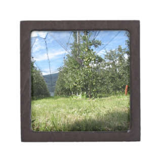 Apple orchard with protection nets jewelry box