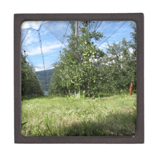 Apple orchard with protection nets keepsake box