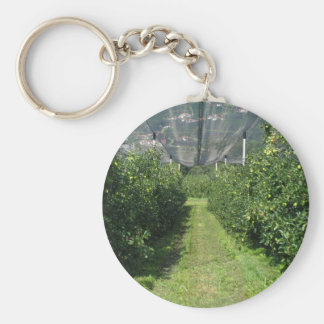 Apple orchard with protection nets key chain
