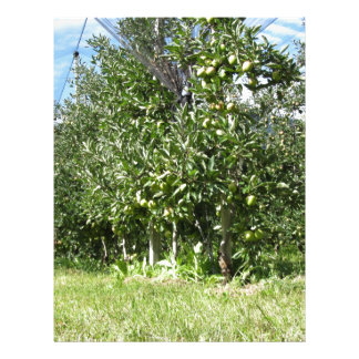 Apple orchard with protection nets letterhead
