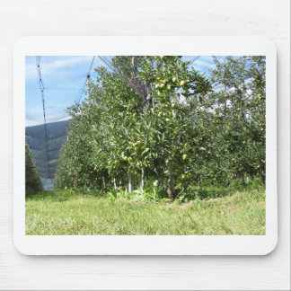 Apple orchard with protection nets mouse pad