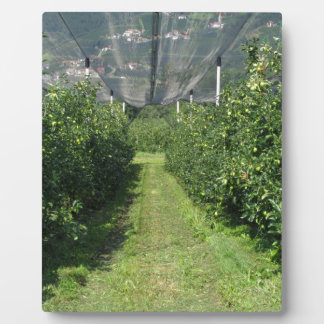 Apple orchard with protection nets plaque