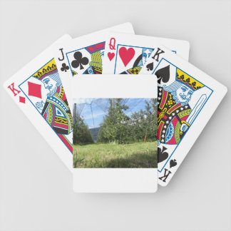 Apple orchard with protection nets bicycle playing cards