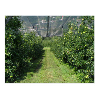 Apple orchard with protection nets postcard