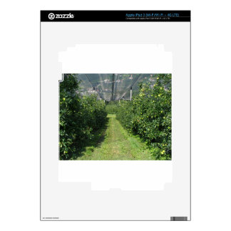 Apple orchard with protection nets skin for iPad 3