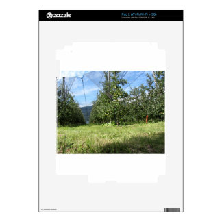 Apple orchard with protection nets iPad 2 decals