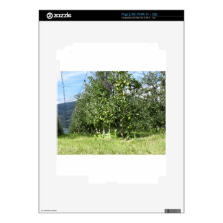 Apple orchard with protection nets skin for the iPad 2
