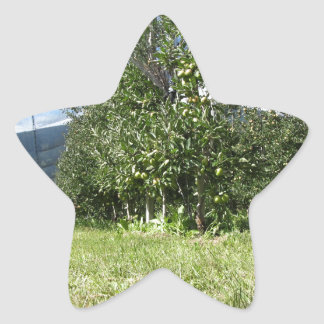 Apple orchard with protection nets star sticker