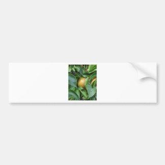 Apple pear on tree branches bumper sticker