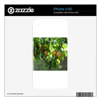 Apple pear on tree branches iPhone 4 skins