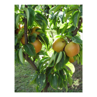 Apple pear on tree branches letterhead