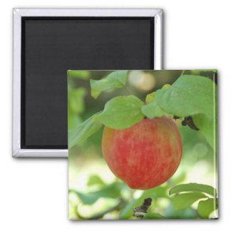 Apple Red Annanas - magnet