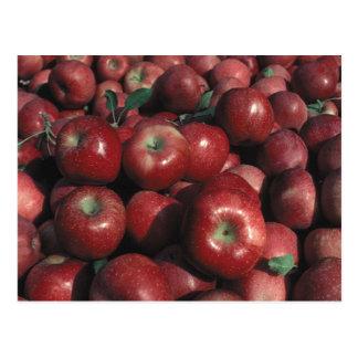 Apple red delicious cosecha postal