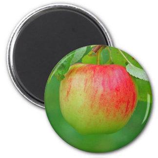 Apple Redfree Magnet
