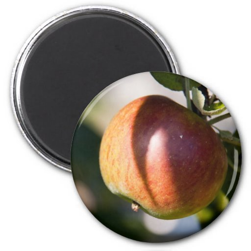 Apple Refrigerator Magnet