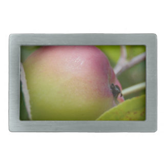 Apple Ripening Belt Buckle
