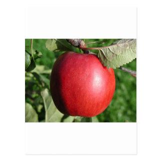 Apple rojo con una hoja postal