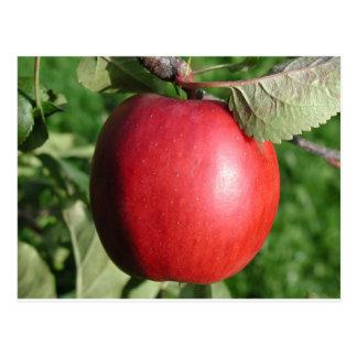 Apple rojo con una hoja tarjetas postales