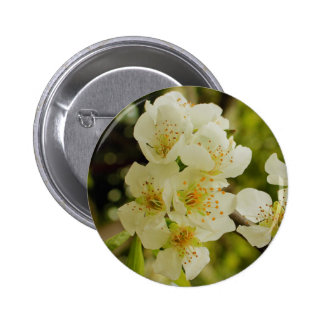 Apple tree blossom pinback buttons