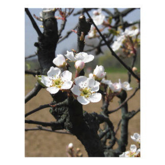 Apple tree branches with blossoms letterhead
