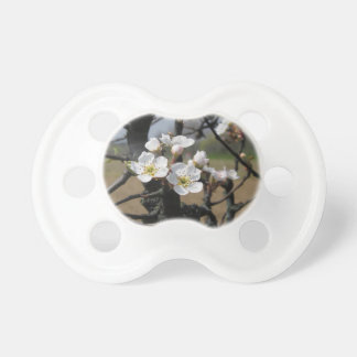 Apple tree branches with blossoms pacifier