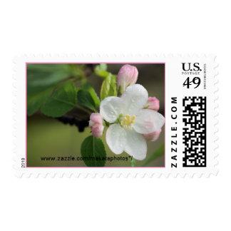 Apple Tree Buds Stamp- choose  size & denomination Stamp