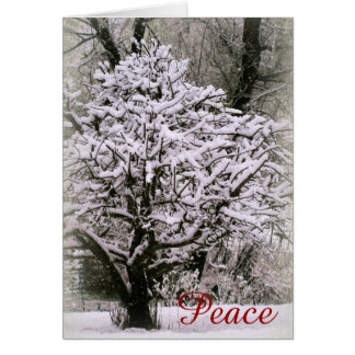 Apple tree covered in snow card
