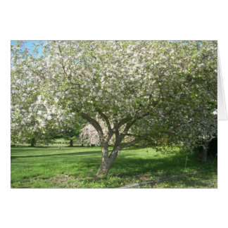 Apple Tree in Bloom Card