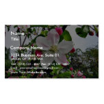 Apple Tree In Blossom Business Card
