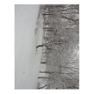 Apple Tree in Winter Postcard