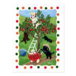 Apple Tree Labradors (dot) Post Card