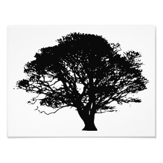 apple tree silhouette photo print