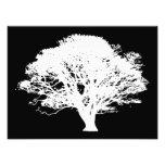 Apple Tree Silhouette Photograph