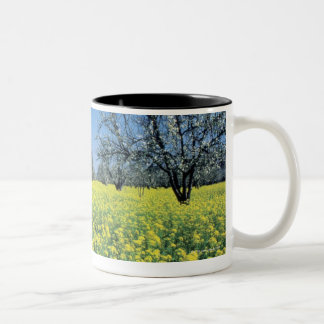 Apple trees in a mustard field, Napa Valley, Two-Tone Coffee Mug