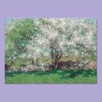 Apple Trees Invitations