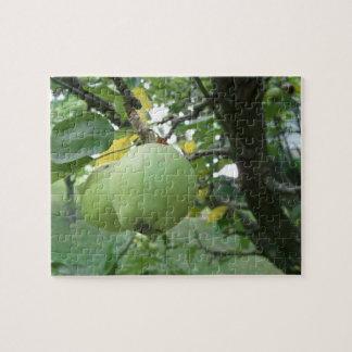 Apple verde en árbol desconcierta rompecabezas con fotos